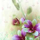 Orchid with flower paint by lensbaby