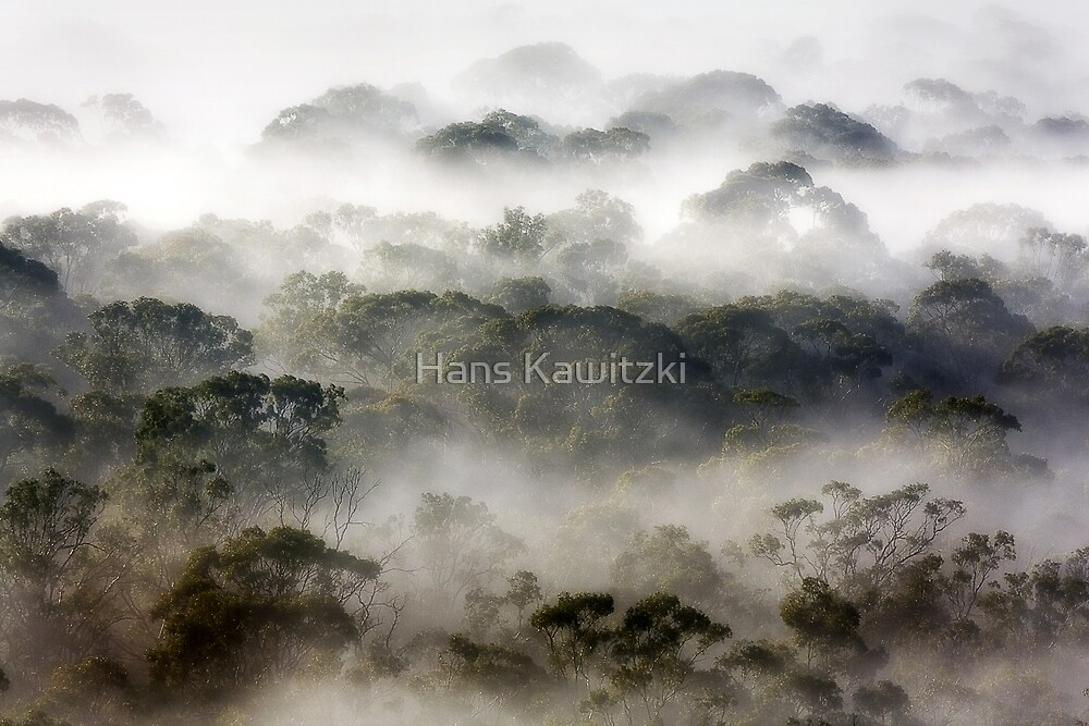 0931 Covered by fog 3 by Hans Kawitzki