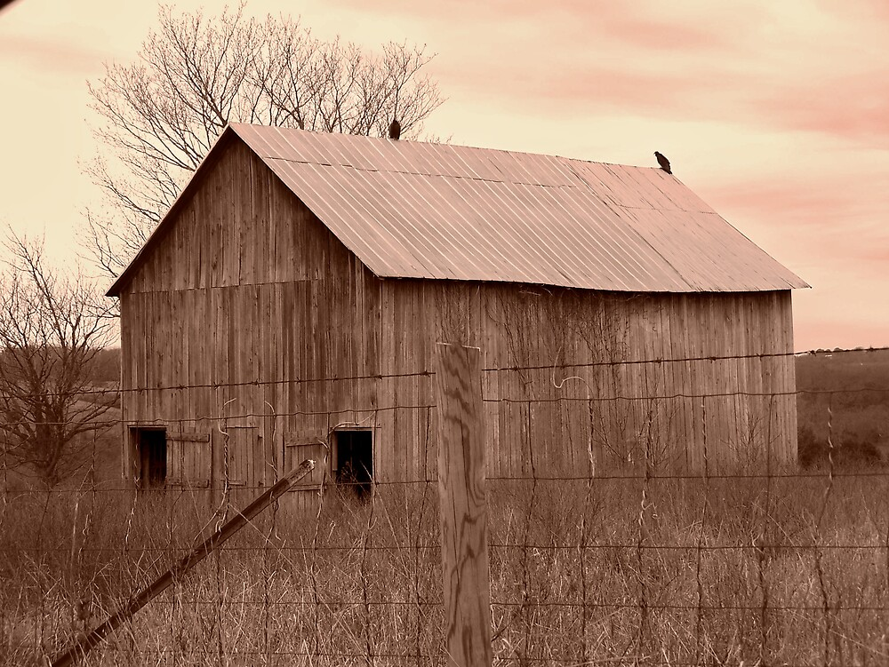 Old Barn with Birds 3 by Kristie King