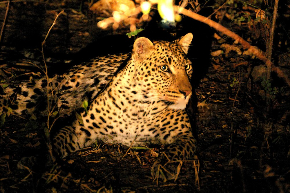 Leopard at night by Roller