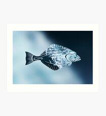 Alaskan Halibut  Art Print