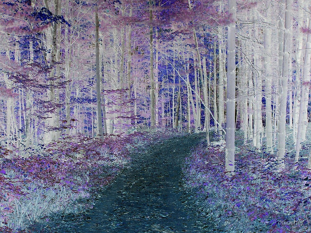 Woodland Path by dmosher