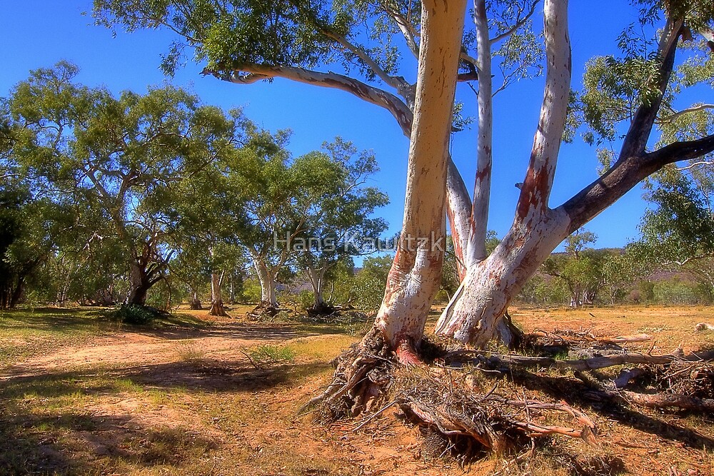 0945 Dry River bed - Northern Territory by Hans Kawitzki