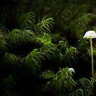 Fungi duo by Stephanie Johnson