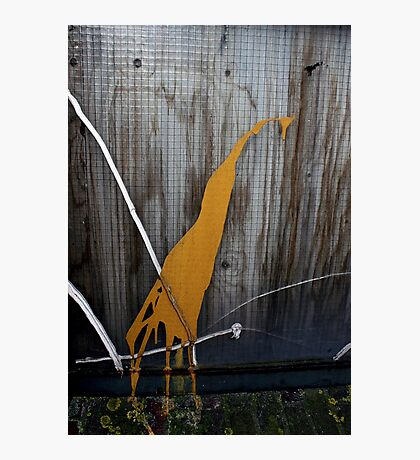Urban Zoo Creature Photographic Print