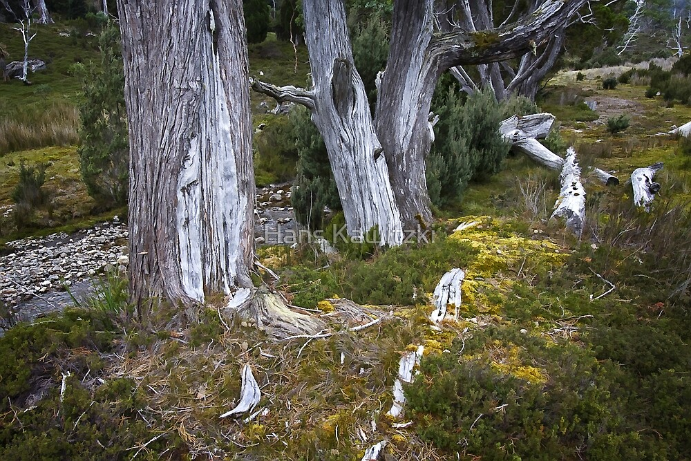 0969 Broken Trees  by Hans Kawitzki