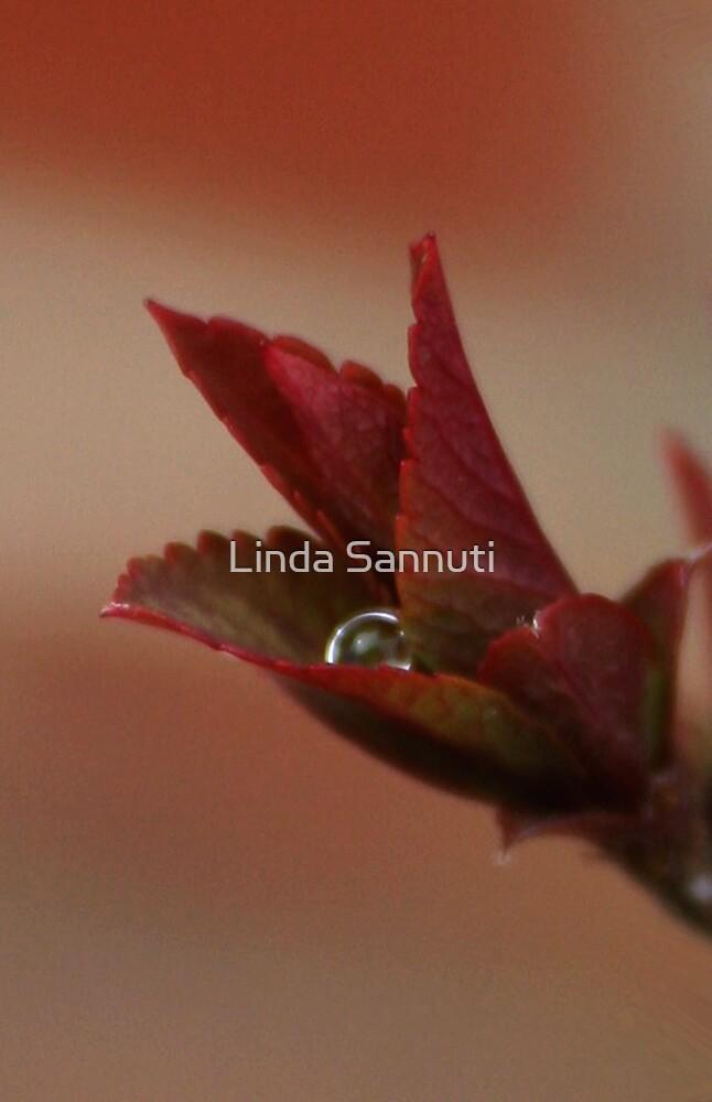 drop on red by Linda Sannuti