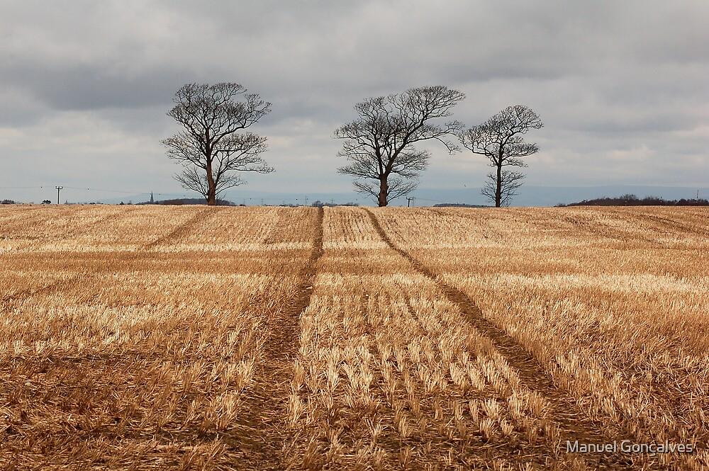 Three trees by Manuel Gonçalves