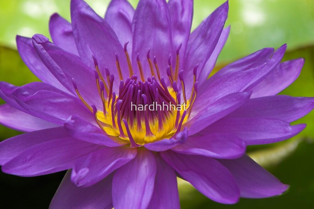 Purple by hardhhhat