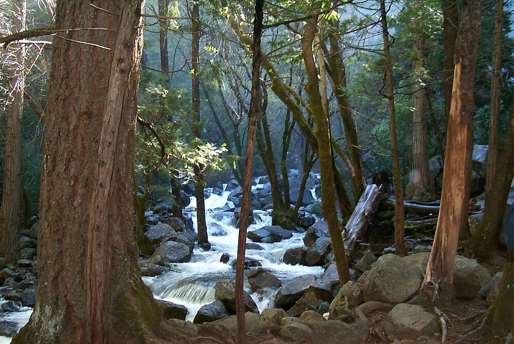Yosemite brook in the trees - Horizontal by StudioN