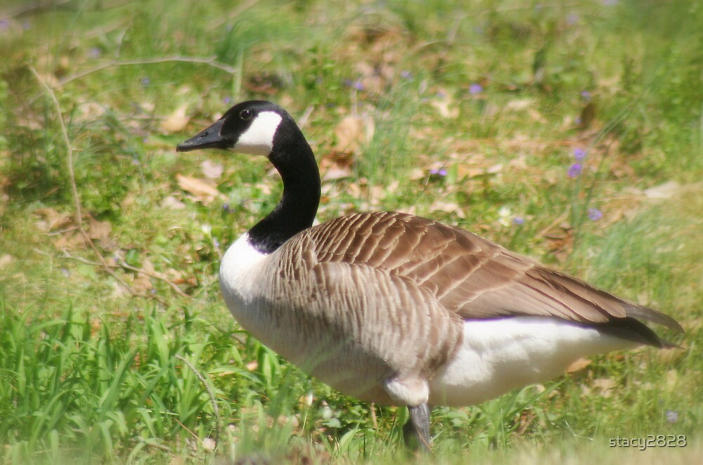 geese by stacy2828