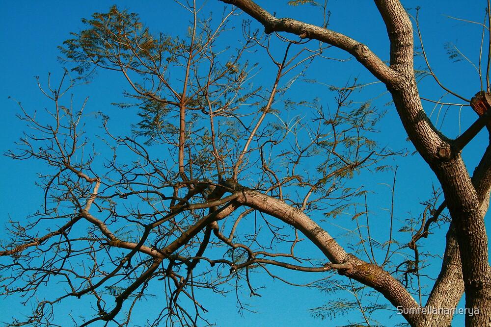 Sky Blue by Sumfellanamerya