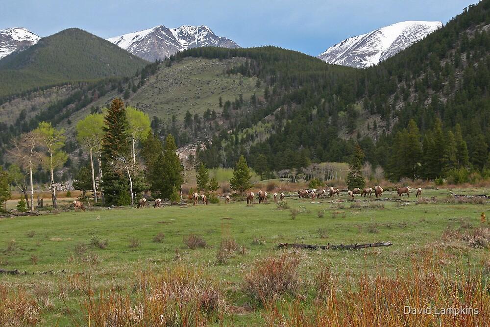 Rocky Mountain Elk by David Lampkins