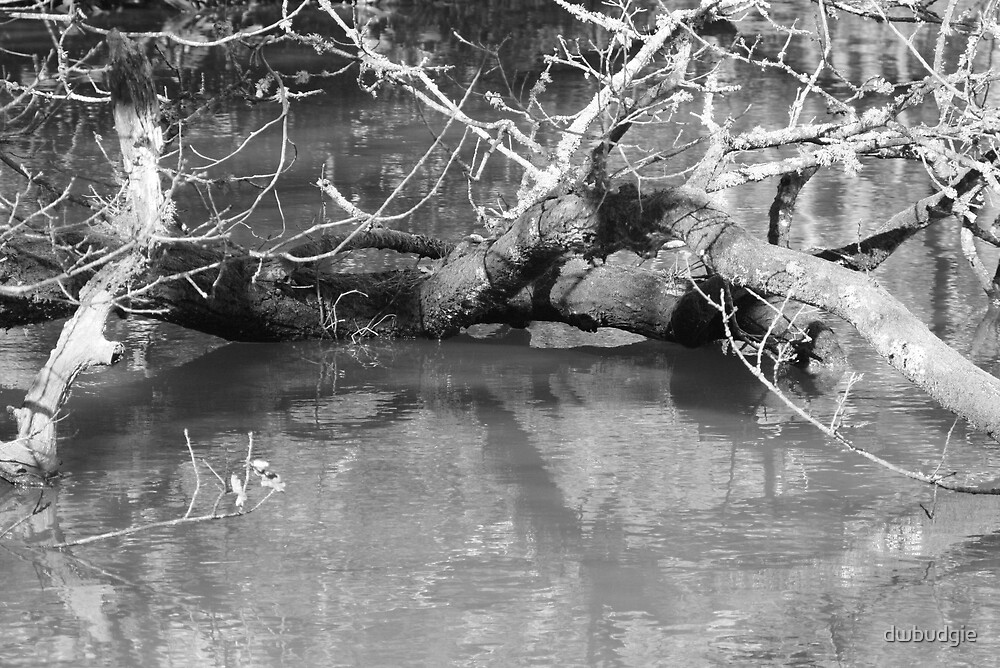 tree in water by dwbudgie