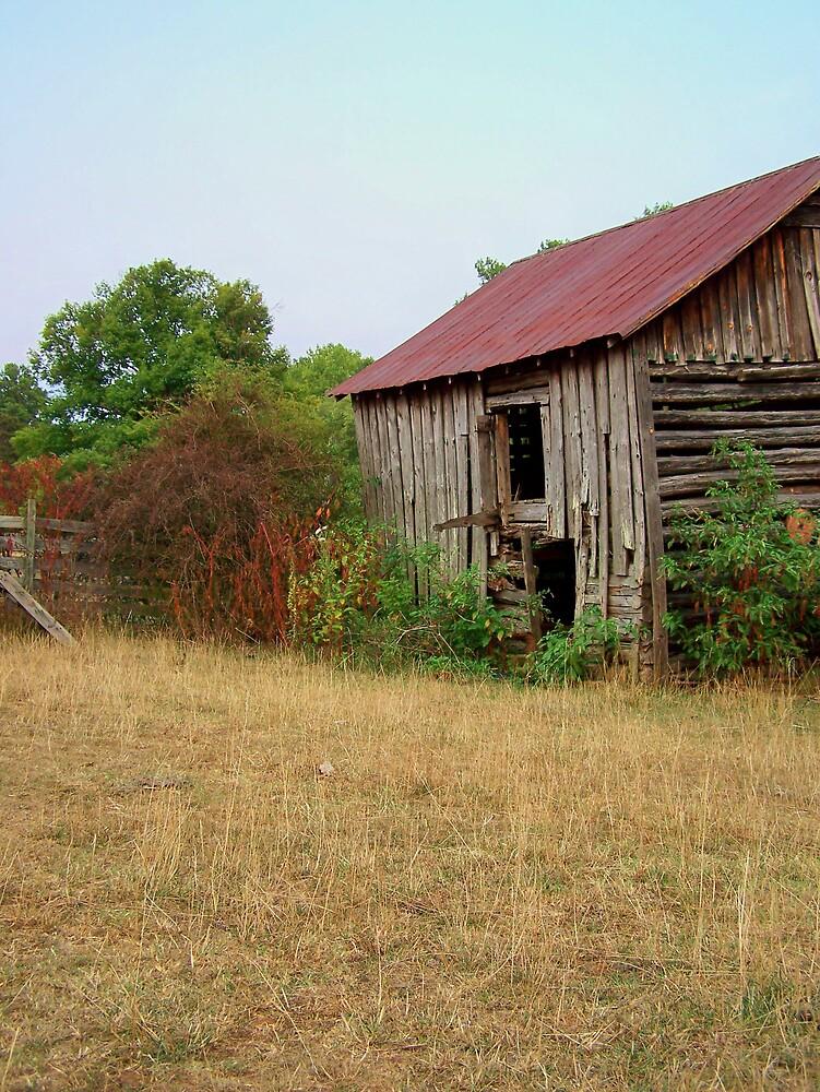 Cow Farm 4 by Kristie King