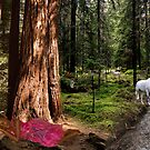 Fairytale Forest by Sandra Smith