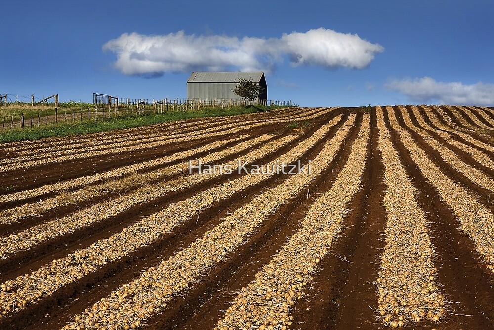 0986 The Onion field  by Hans Kawitzki