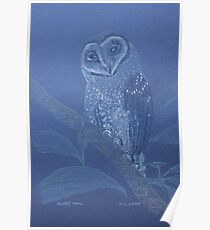 Australian Sooty Owl, colour pencil art Poster