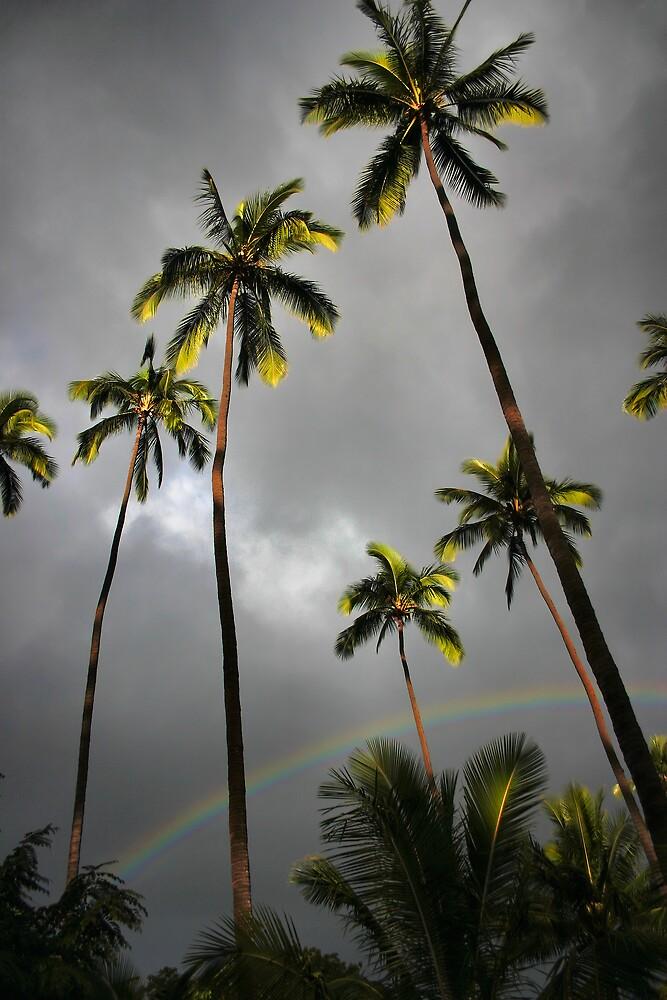 Kauai Palms by Philip James Filia