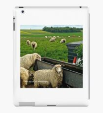 England - Sheep in Countryside iPad Case/Skin