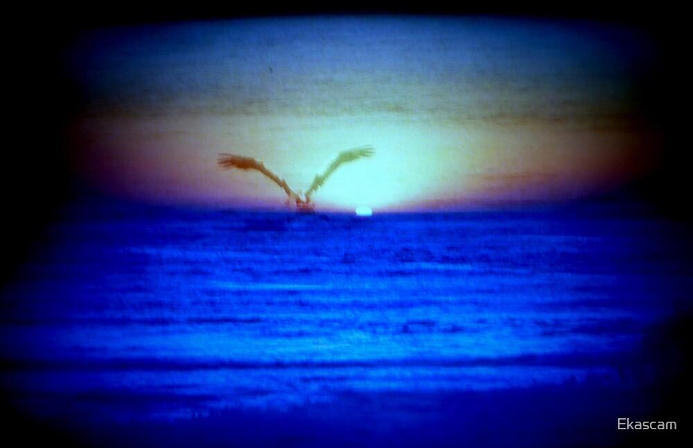 GIANT BIRD ON THE OCEAN by Ekascam
