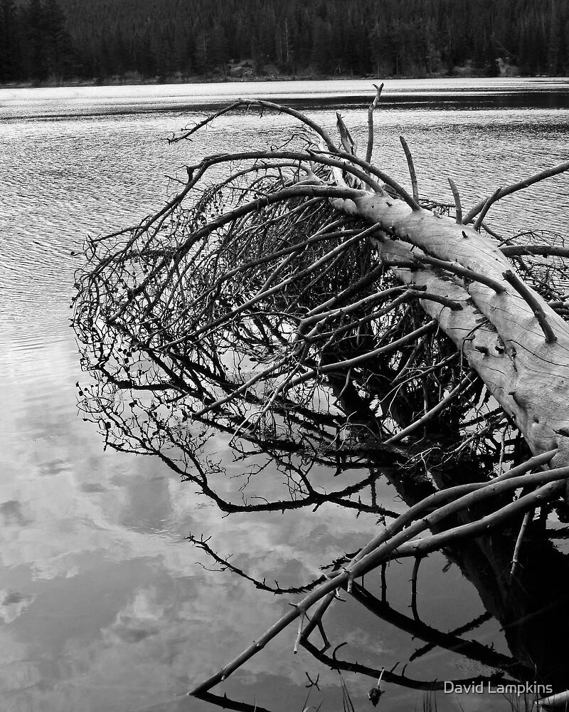 Treefall - Sprague Lake by David Lampkins
