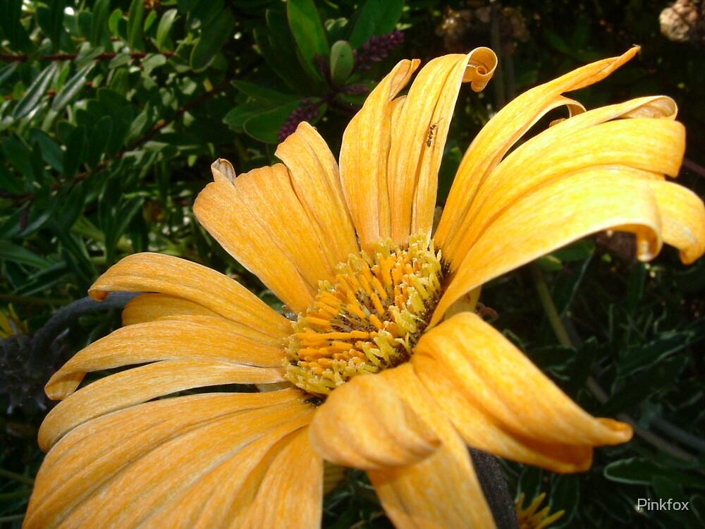 Flowers @ Nicks by Pinkfox