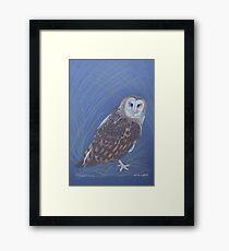 Australian Grass Owl, colour pencil art Framed Print