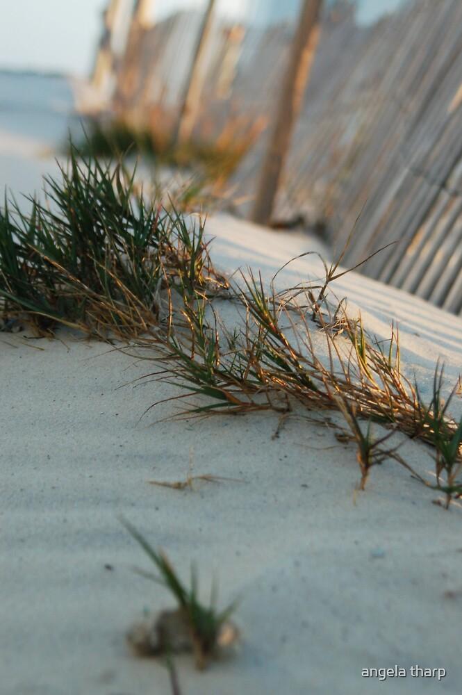 Beach Way by angela tharp