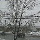 An Icy Day by Glenn Esau