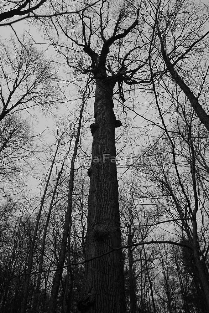 Looking up.... by Wanda Faircloth
