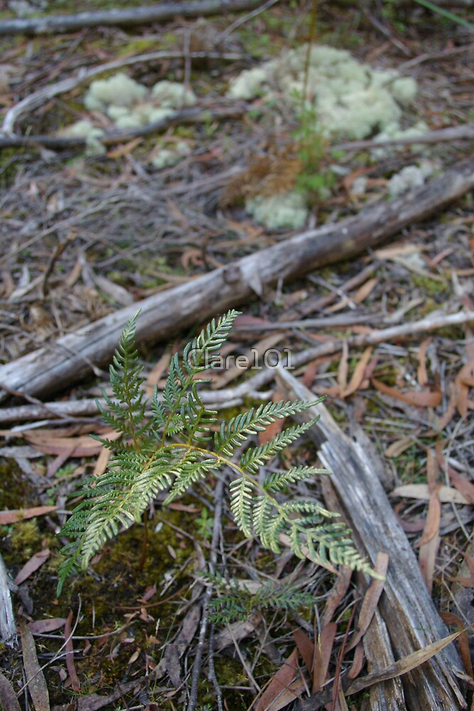 Baby Fern by Clare101