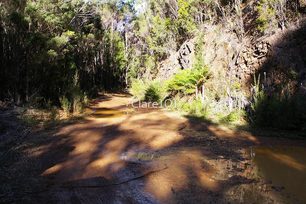 Montezuma Falls Track by Clare101