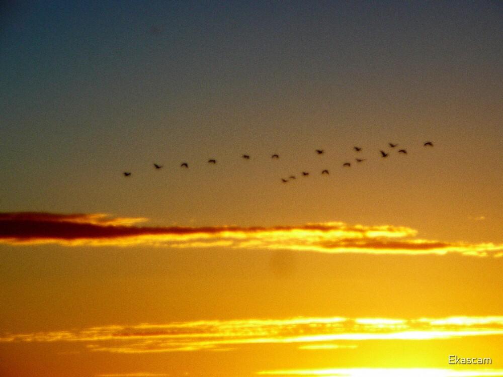 GOLDEN FLIGHT OVER THE OCEAN by Ekascam