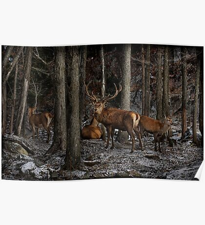Elk in the Forest Poster