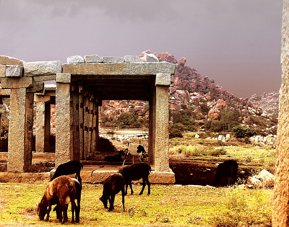 hampi goats 3 by neil davis