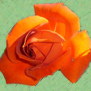 Outstanding Orange  by KazM