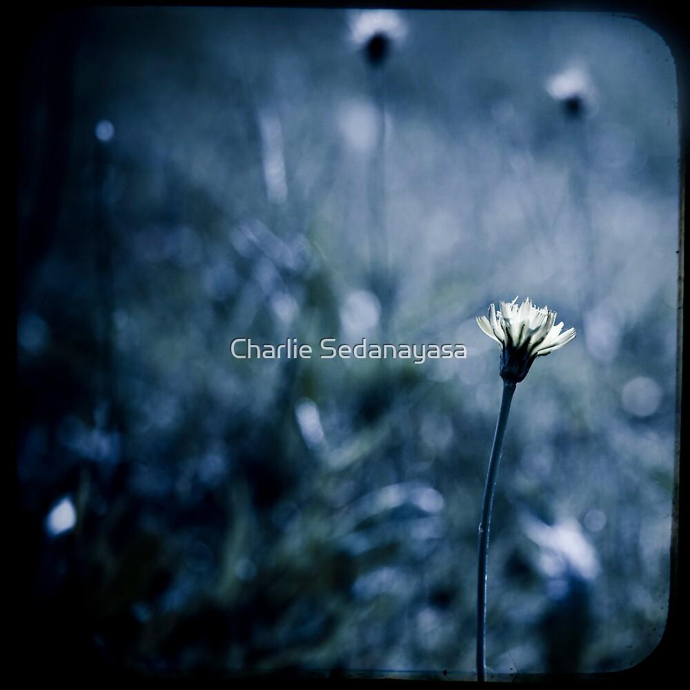 ...joy... by Charlie Sedanayasa