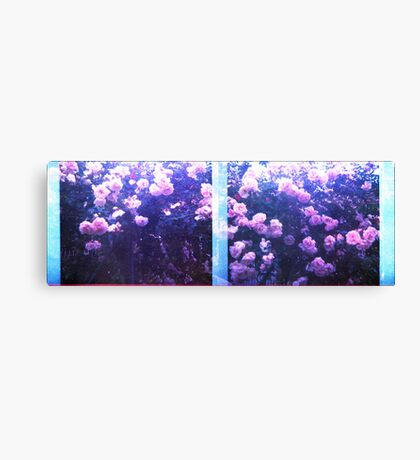 rosey roses  Canvas Print