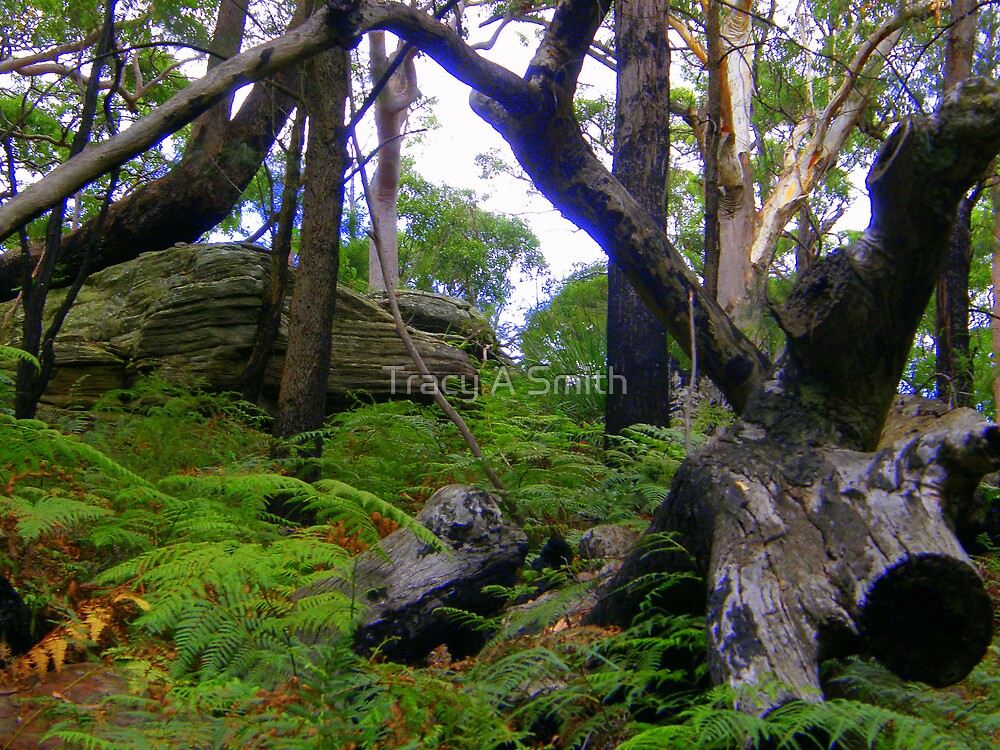 Our great Australian Bushland by Tracy A Smith