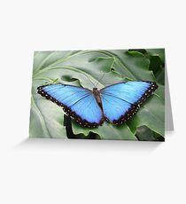 Bluebelle Greeting Card