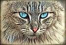 Blue eyed beauty by © Kira Bodensted