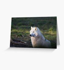 Canis Lupus Arctos II Greeting Card
