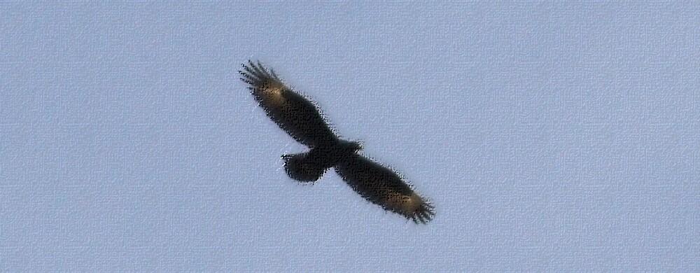 Black Eagle Overhead - Pastel by Paul Lindenberg