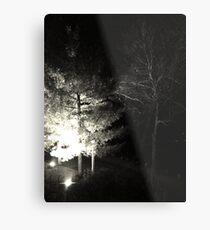 Winter Solstice Evening Trees 2014 Metal Print