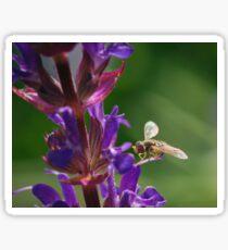 Hoverfly on Salvia Flower Sticker