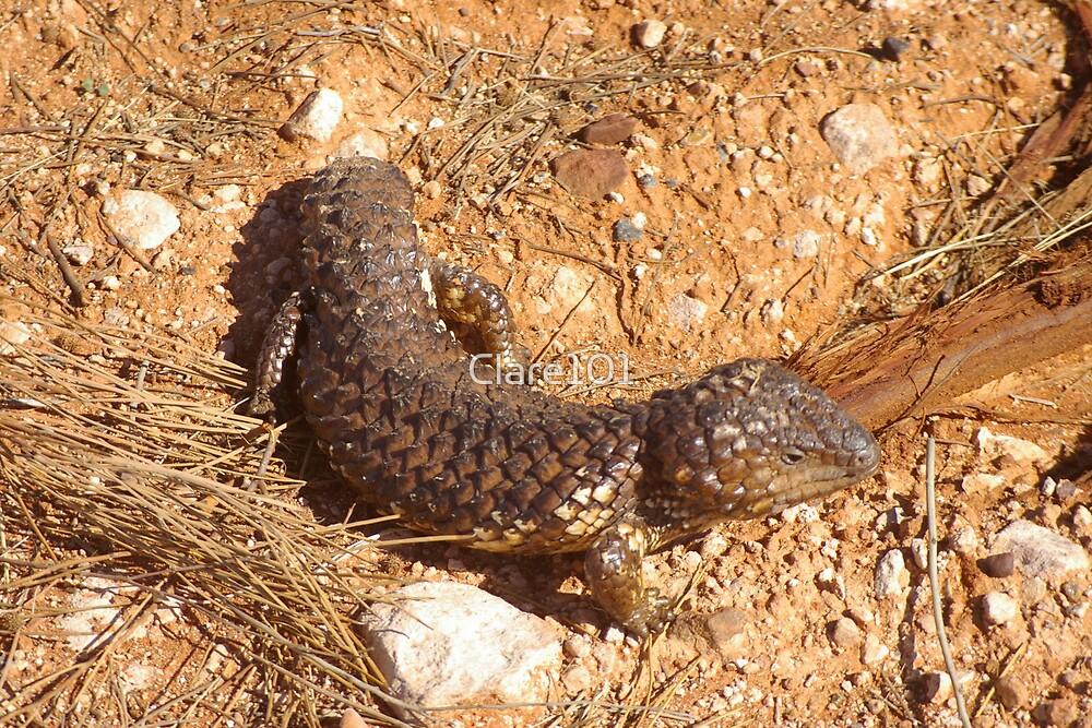 Shingle Back Lizard by Clare101