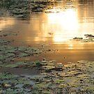 On Golden Pond by Kathie Nichols