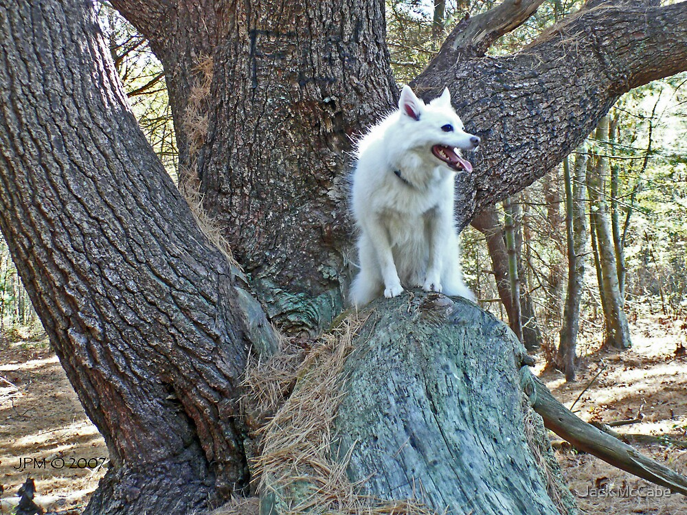 Wild Wolf Sylvie the Wonder Dog! by Jack McCabe