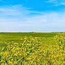 Birchington Fields of Dreams.. by buddybetsy